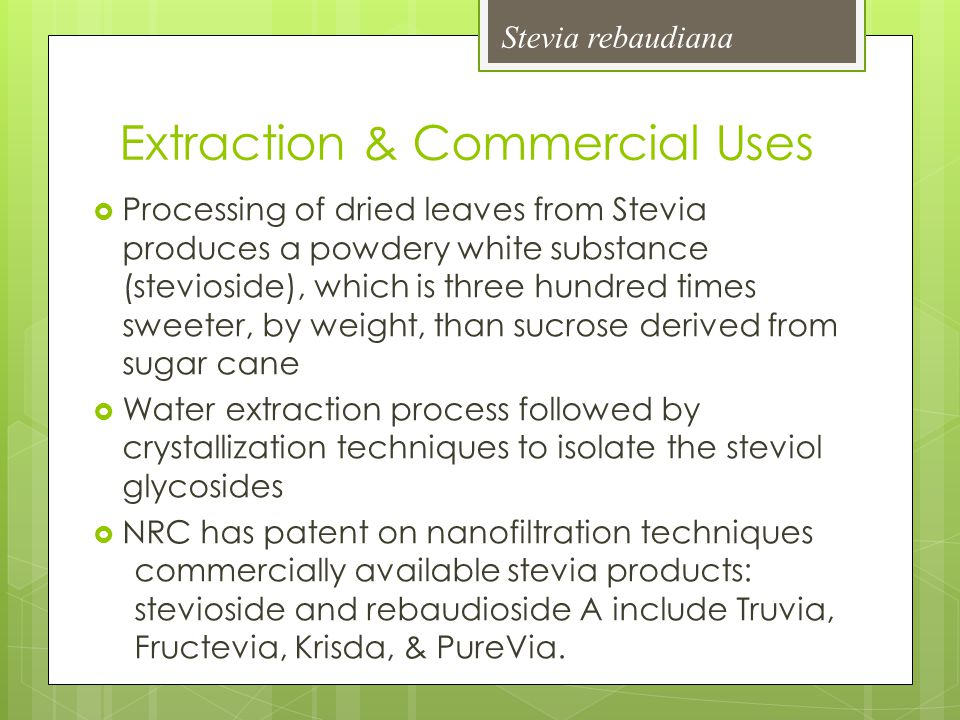 Extraction & Commercial Uses  Processing of dried leaves from Stevia produces a powdery white substance (stevioside), which is three hundred times sw