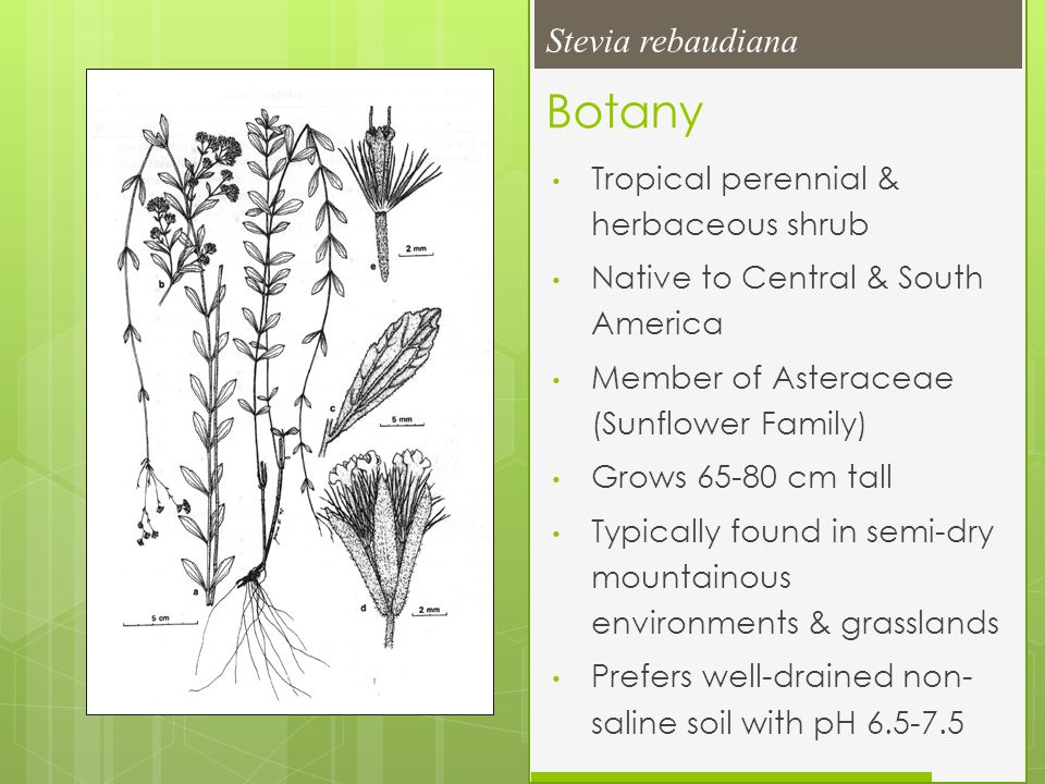 Botany Tropical perennial & herbaceous shrub Native to Central & South America Member of Asteraceae (Sunflower Family) Grows 65-80 cm tall Typically f