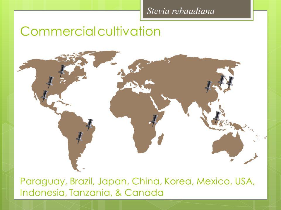 Commercial cultivation Paraguay, Brazil, Japan, China, Korea, Mexico, USA, Indonesia, Tanzania, & Canada
