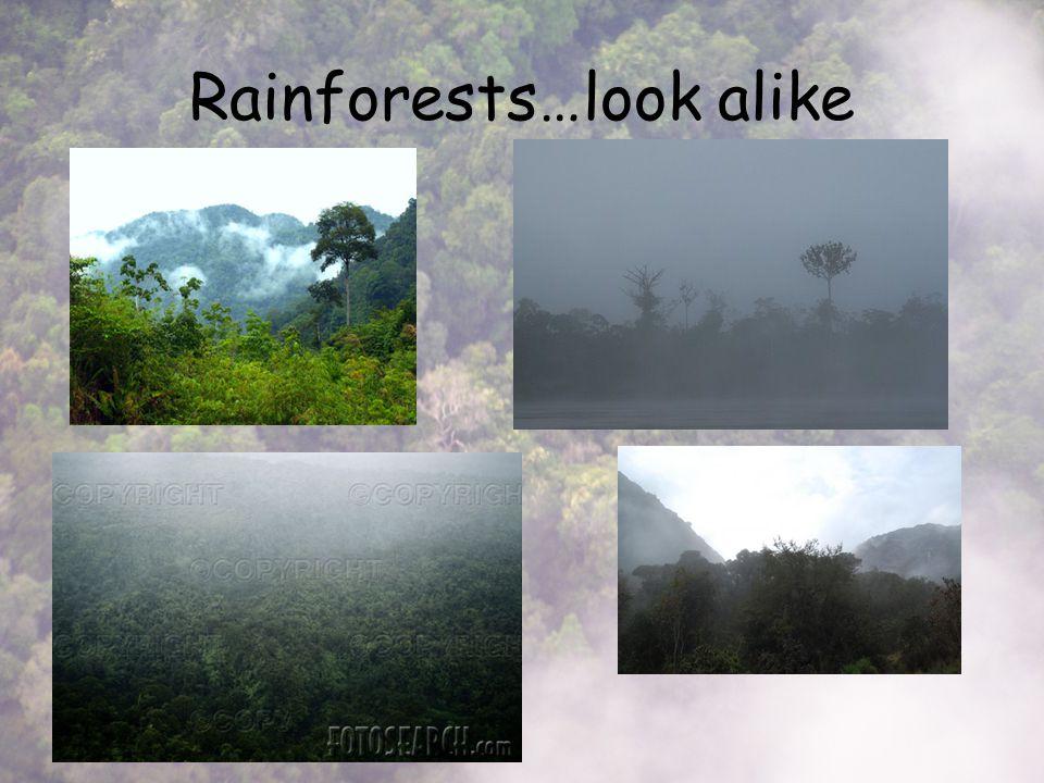 Rainforests…look alike