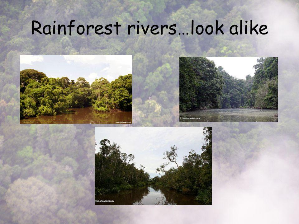 Rainforest rivers…look alike