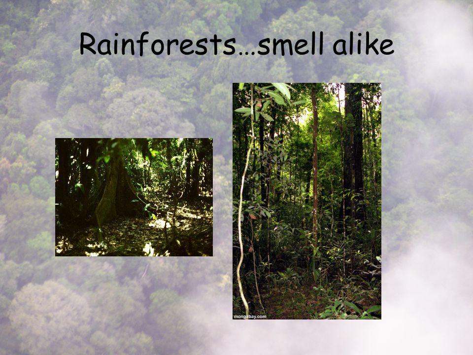 Rainforests…smell alike