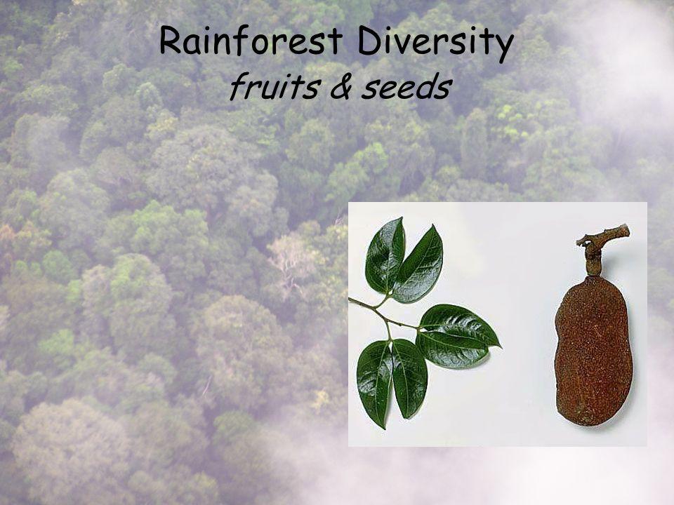 Rainforest Diversity fruits & seeds
