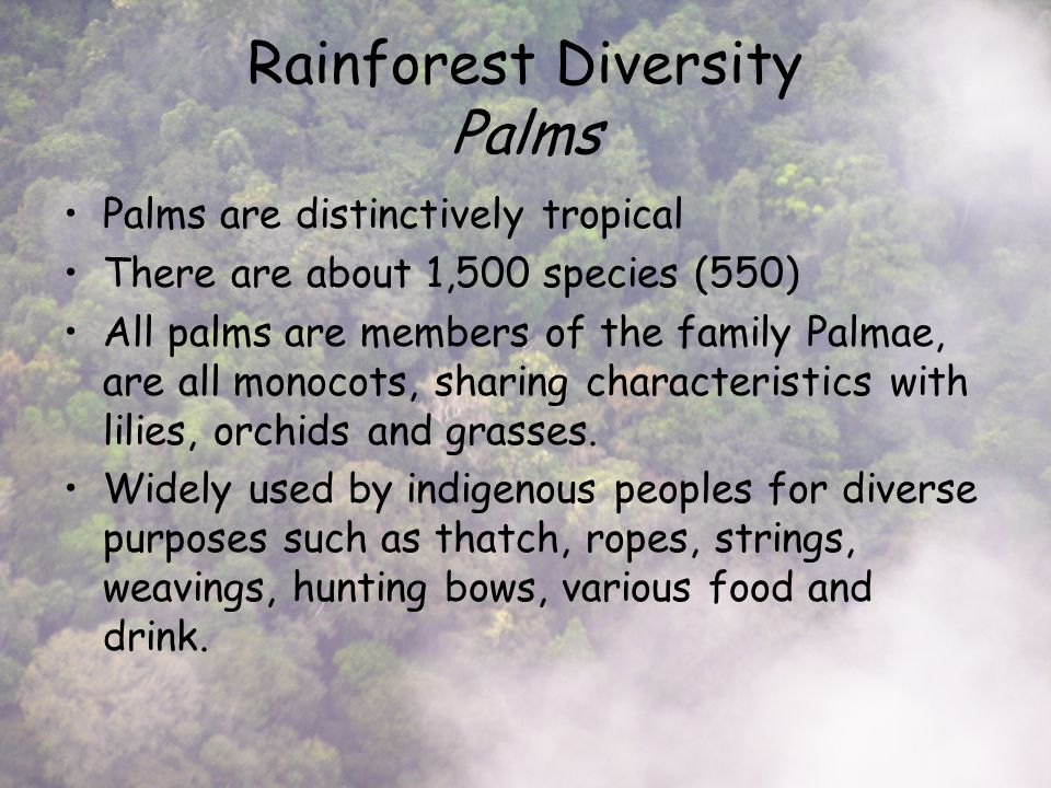 Rainforest Diversity Palms Palms are distinctively tropical There are about 1,500 species (550) All palms are members of the family Palmae, are all monocots, sharing characteristics with lilies, orchids and grasses.