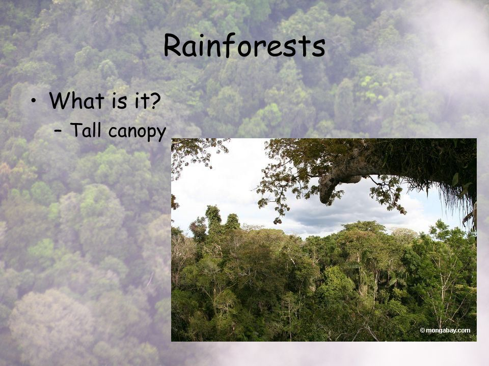 Rainforests What is it –Tall canopy