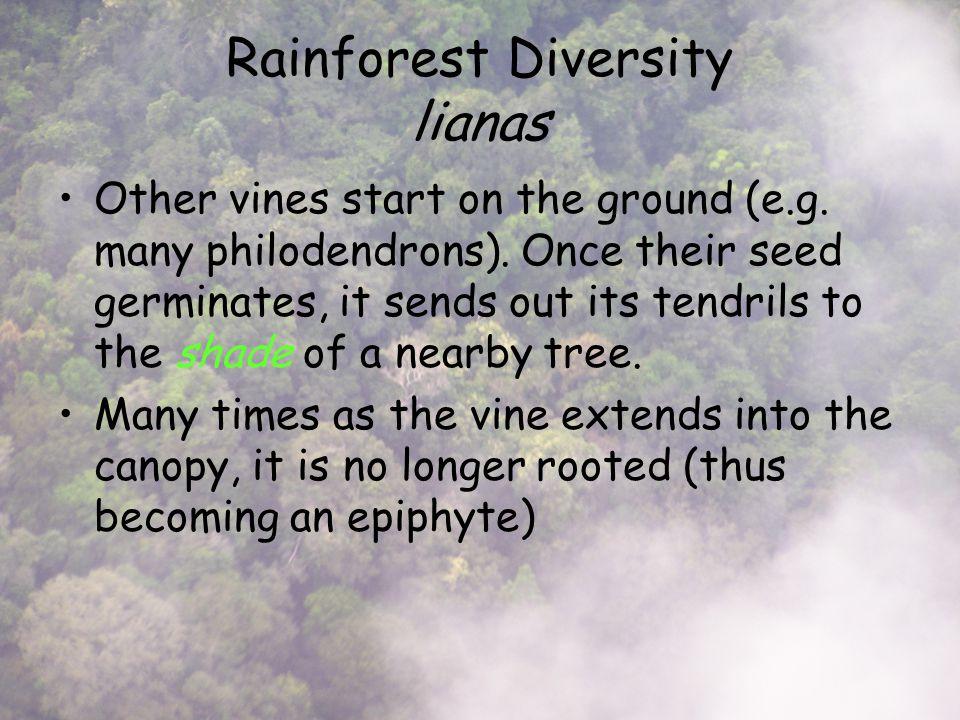 Rainforest Diversity lianas Other vines start on the ground (e.g.