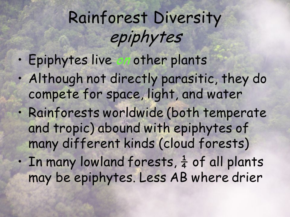 Rainforest Diversity epiphytes Epiphytes live on other plants Although not directly parasitic, they do compete for space, light, and water Rainforests worldwide (both temperate and tropic) abound with epiphytes of many different kinds (cloud forests) In many lowland forests, ¼ of all plants may be epiphytes.