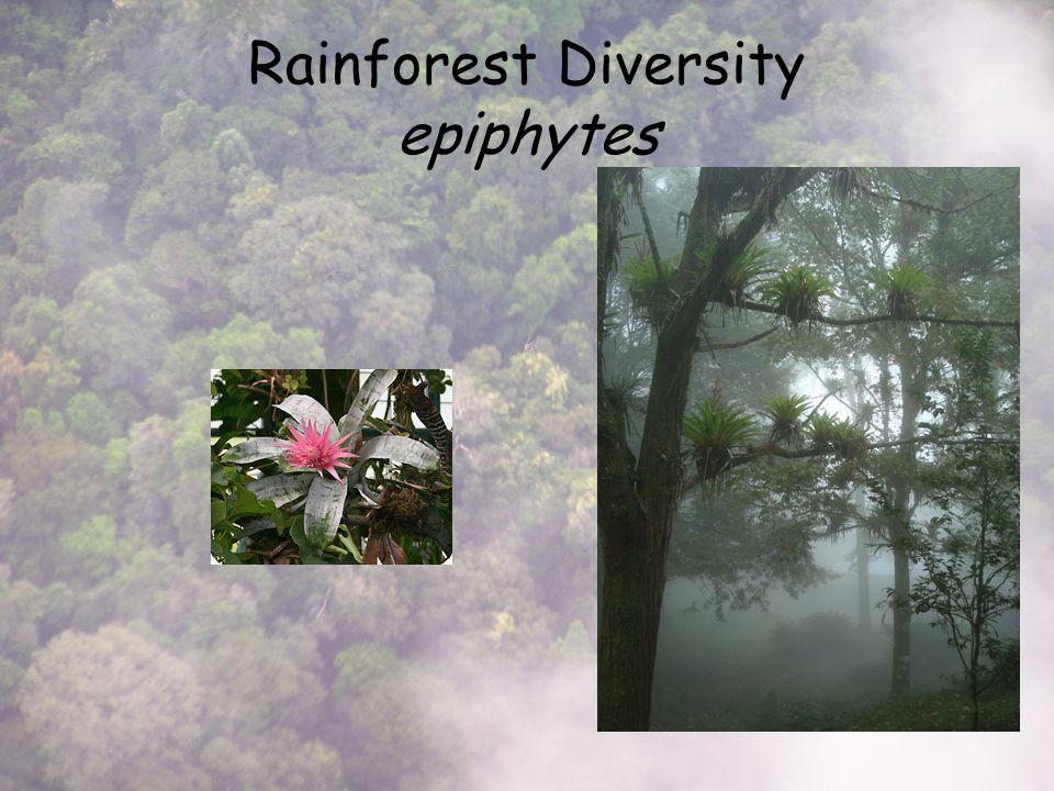 Rainforest Diversity epiphytes