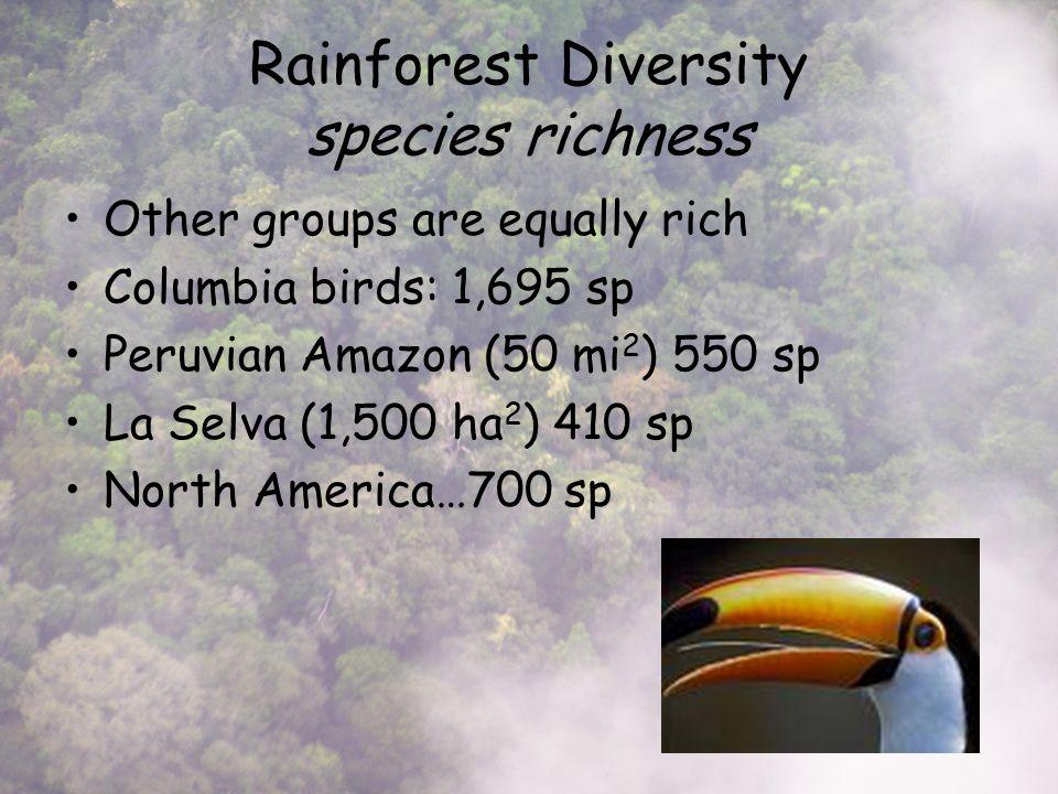 Rainforest Diversity species richness Other groups are equally rich Columbia birds: 1,695 sp Peruvian Amazon (50 mi 2 ) 550 sp La Selva (1,500 ha 2 ) 410 sp North America…700 sp