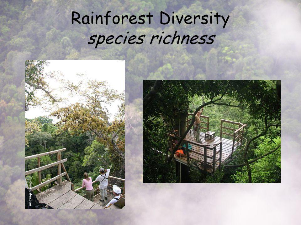 Rainforest Diversity species richness