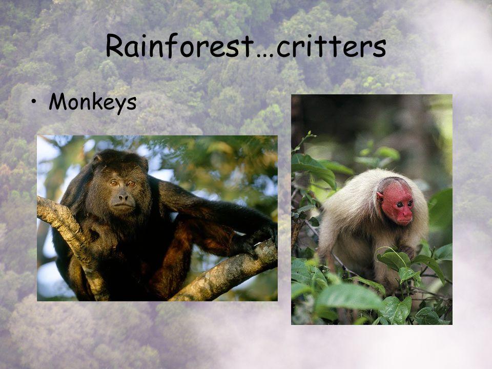Rainforest…critters Monkeys