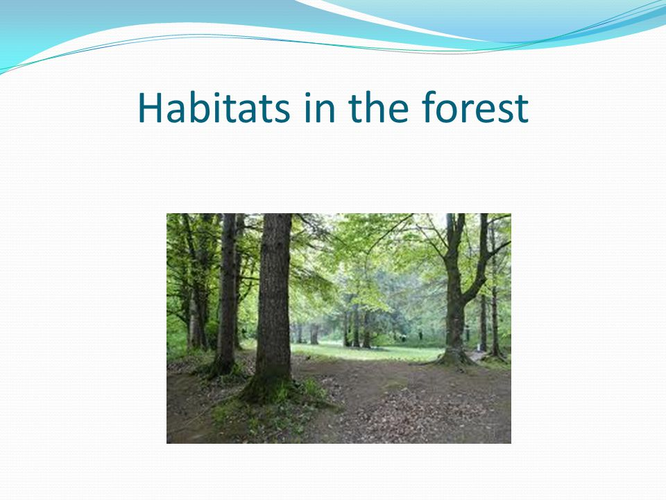 Habitats in the forest