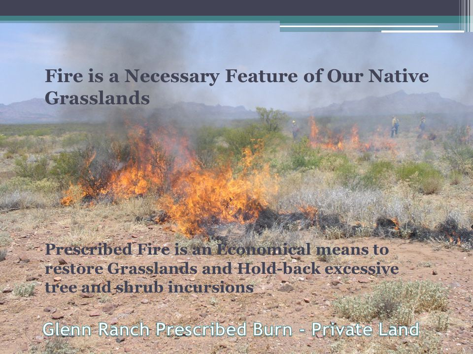Fire is a Necessary Feature of Our Native Grasslands Prescribed Fire is an Economical means to restore Grasslands and Hold-back excessive tree and shrub incursions