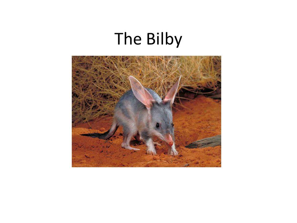 The Bilby Kkkkkkk mmmmmm
