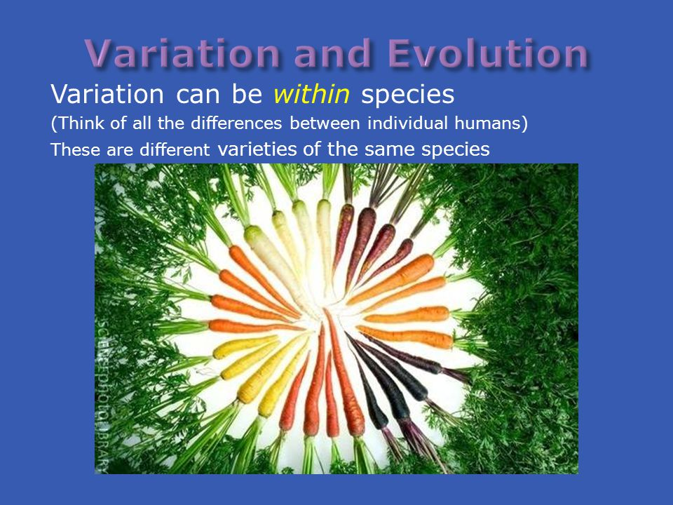 Variation can be within species (Think of all the differences between individual humans) These are different varieties of the same species