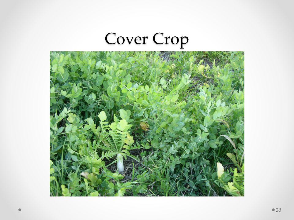Cover Crop 28