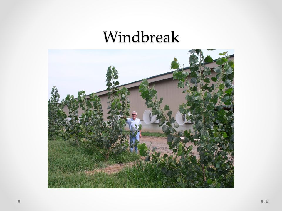 Windbreak 36