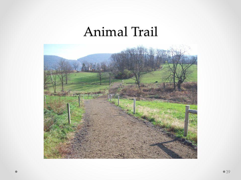 Animal Trail 39
