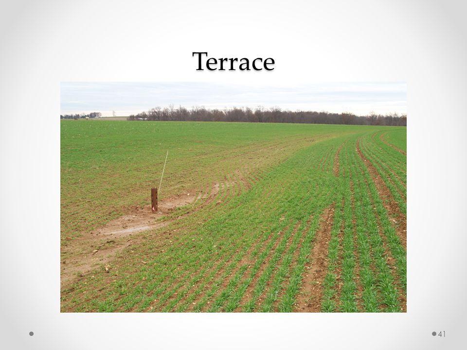 Terrace 41