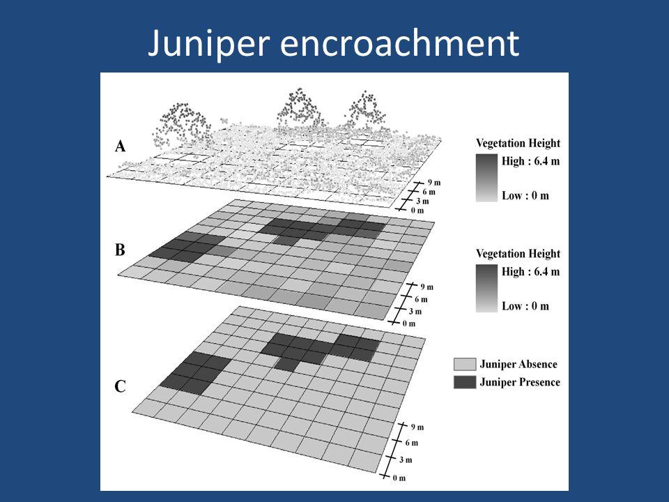 Juniper encroachment
