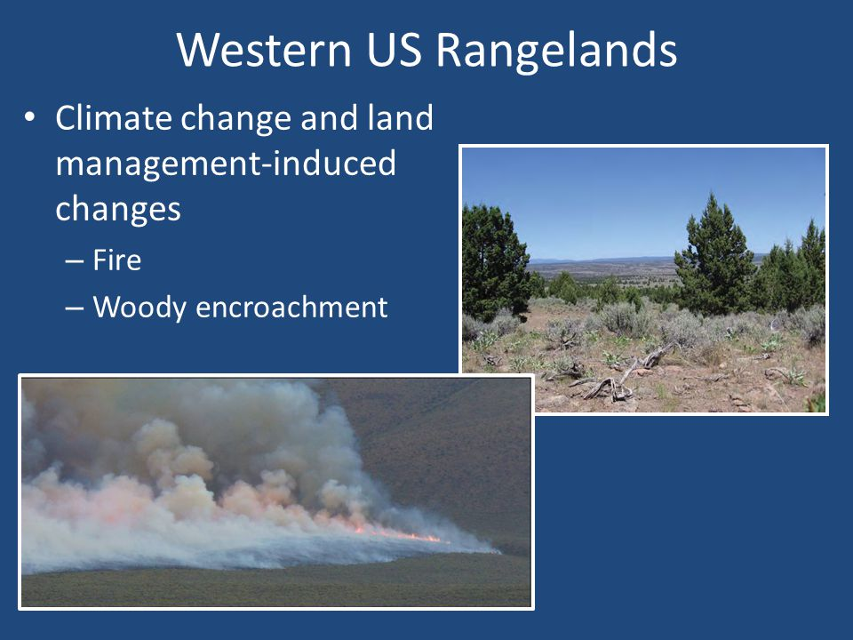Western US Rangelands Climate change and land management-induced changes – Fire – Woody encroachment