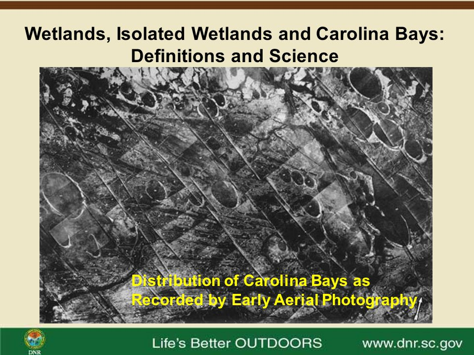 Wetlands, Isolated Wetlands and Carolina Bays: Definitions and Science Carolina Bays may be the results of shallow lakes formed after the ocean receded from the Coastal Plain.