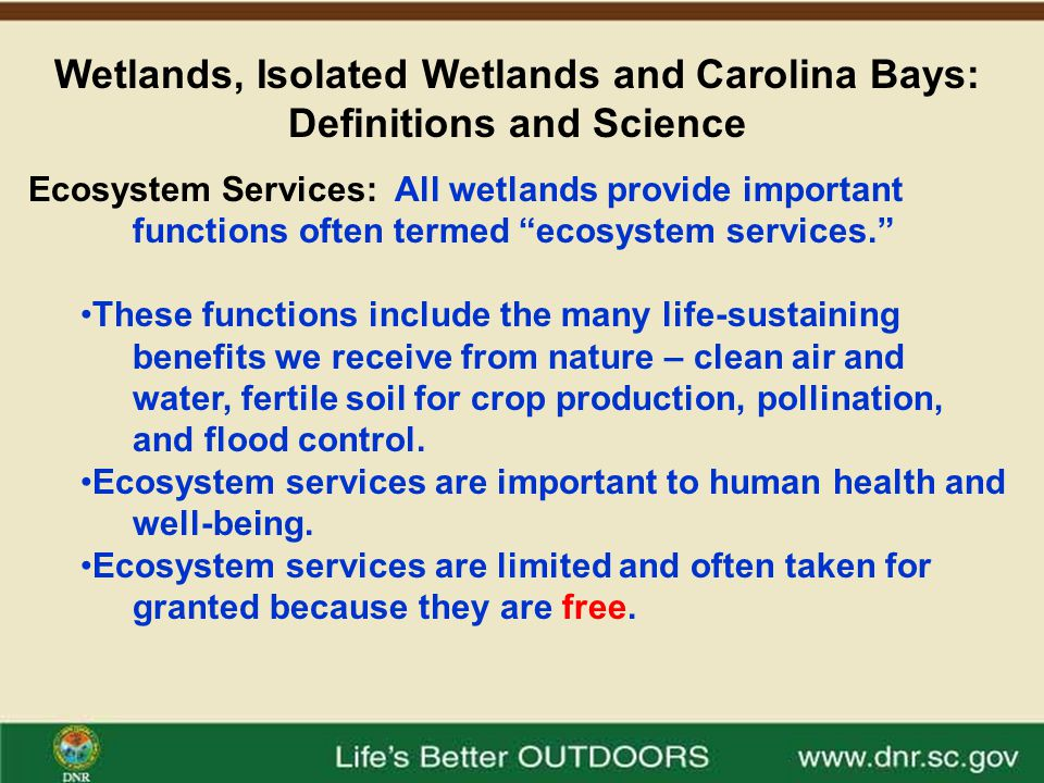 Wetlands, Isolated Wetlands and Carolina Bays: Definitions and Science Ecosystem Services – Wetlands Are Worth Billions.