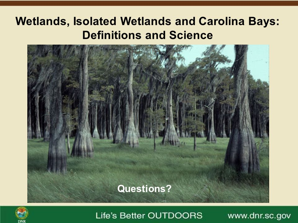 Wetlands, Isolated Wetlands and Carolina Bays: Definitions and Science Questions