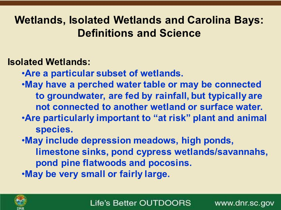 Wetlands, Isolated Wetlands and Carolina Bays: Definitions and Science Isolated Wetlands are Important for Hundreds of Species of Plants and Animals in South Carolina.