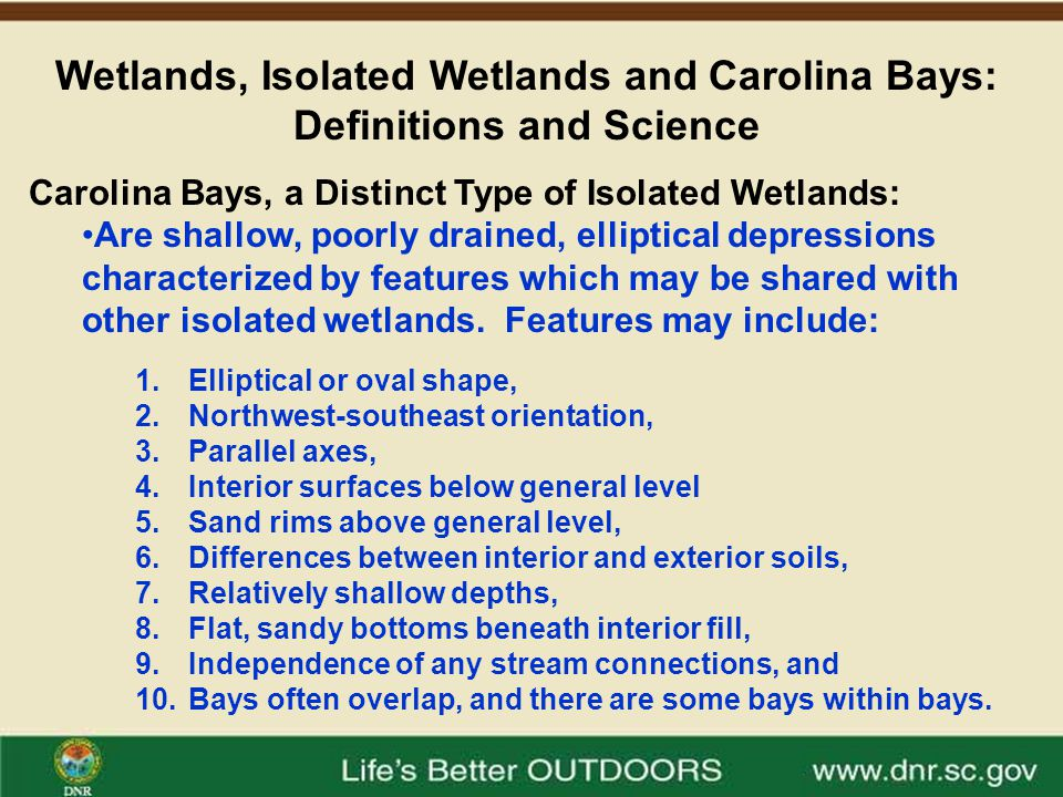 Wetlands, Isolated Wetlands and Carolina Bays: Definitions and Science Carolina bays geographically are located from New Jersey to North Florida and are most common in the Carolinas.