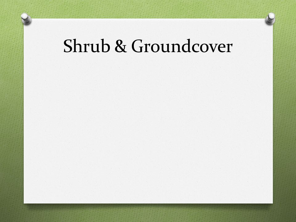 Shrub & Groundcover