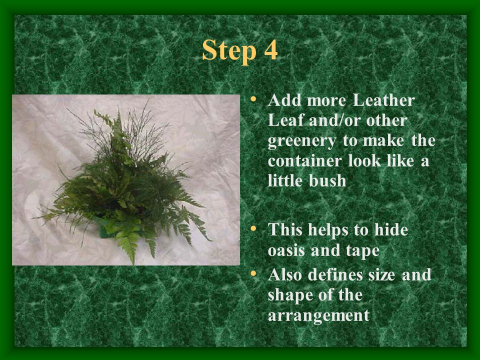 Step 4 Add more Leather Leaf and/or other greenery to make the container look like a little bush This helps to hide oasis and tape Also defines size a
