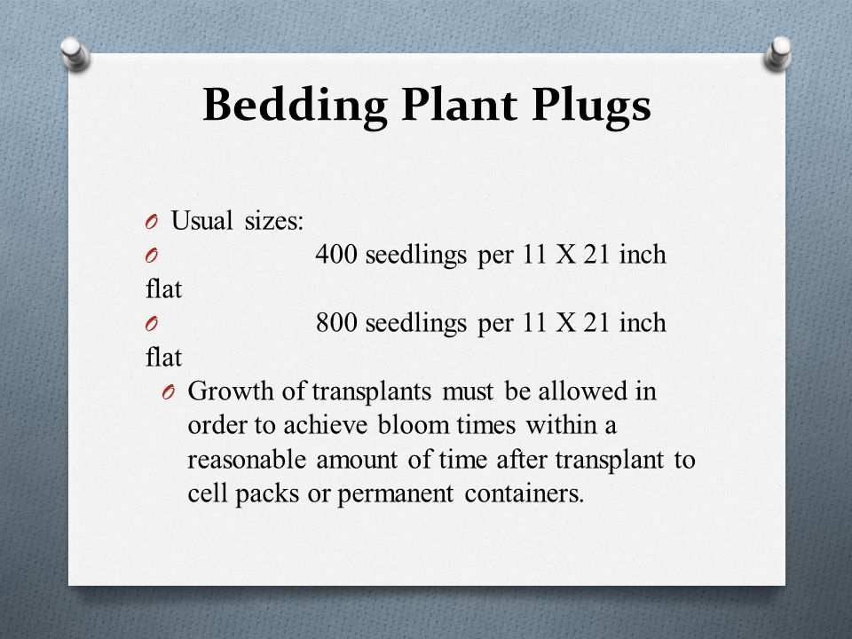 Bedding Plant Plugs O Usual sizes: O 400 seedlings per 11 X 21 inch flat O 800 seedlings per 11 X 21 inch flat O Growth of transplants must be allowed