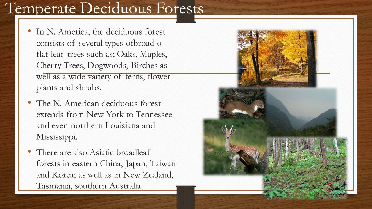 Temperate Deciduous Forests In N.