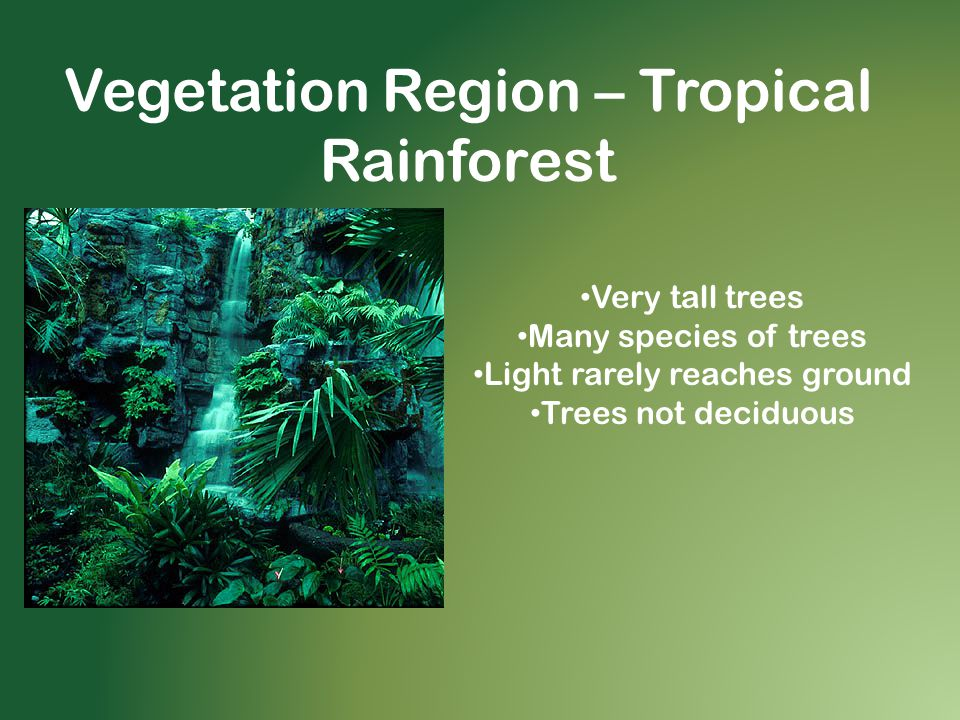 Vegetation Region – Tropical Rainforest Very tall trees Many species of trees Light rarely reaches ground Trees not deciduous