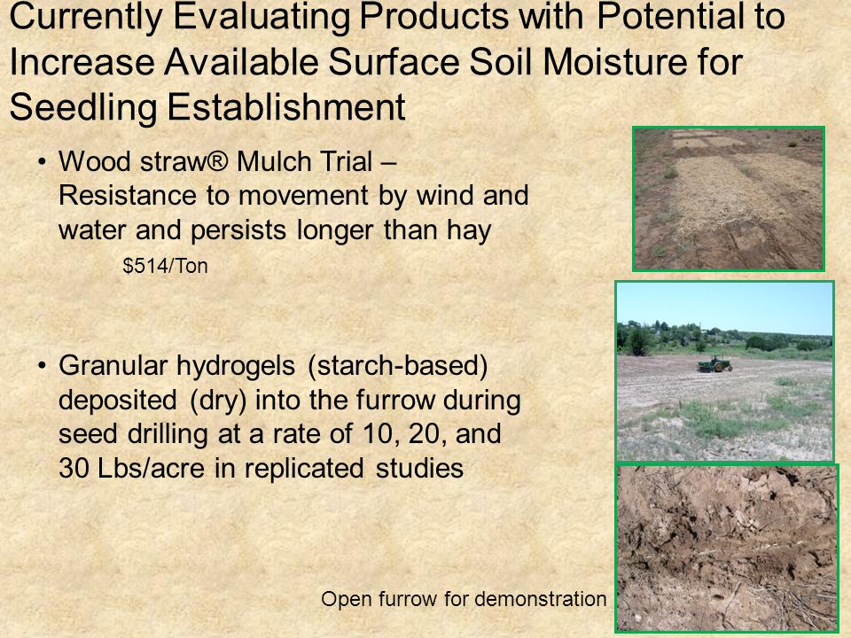 Currently Evaluating Products with Potential to Increase Available Surface Soil Moisture for Seedling Establishment Wood straw® Mulch Trial – Resistan