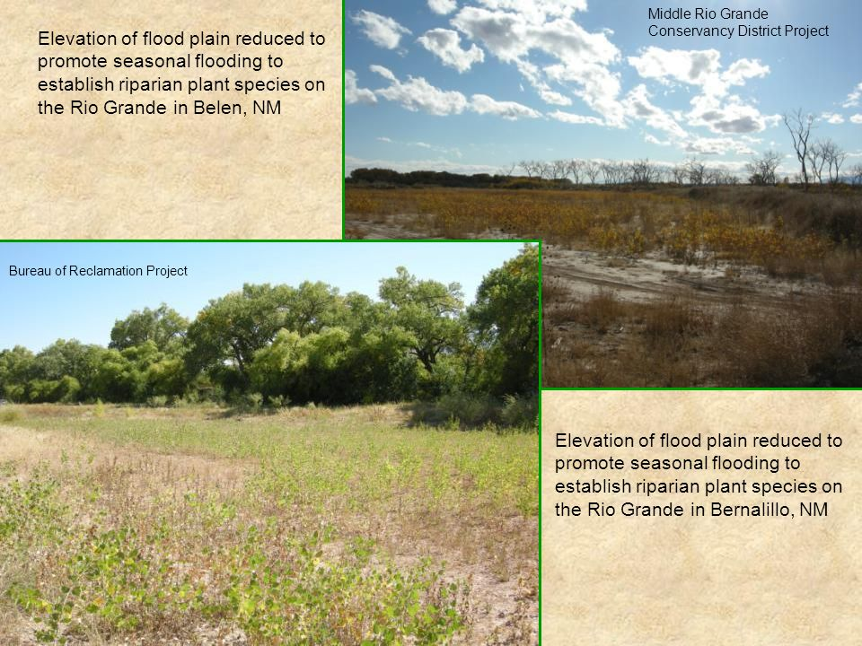 Elevation of flood plain reduced to promote seasonal flooding to establish riparian plant species on the Rio Grande in Belen, NM Middle Rio Grande Con