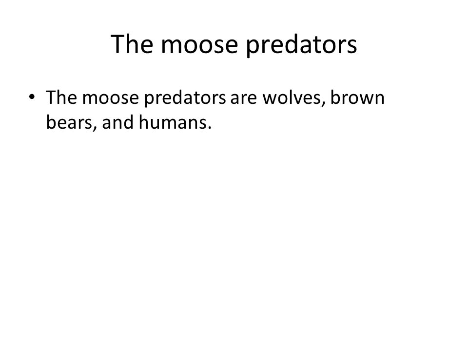 The moose predators The moose predators are wolves, brown bears, and humans.