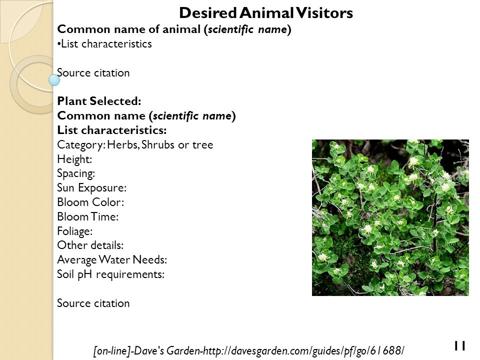 Desired Animal Visitors Common name of animal (scientific name) List characteristics Source citation Plant Selected: Common name (scientific name) List characteristics: Category: Herbs, Shrubs or tree Height: Spacing: Sun Exposure: Bloom Color: Bloom Time: Foliage: Other details: Average Water Needs: Soil pH requirements: Source citation [on-line]-Dave s Garden-http://davesgarden.com/guides/pf/go/61688/ 11