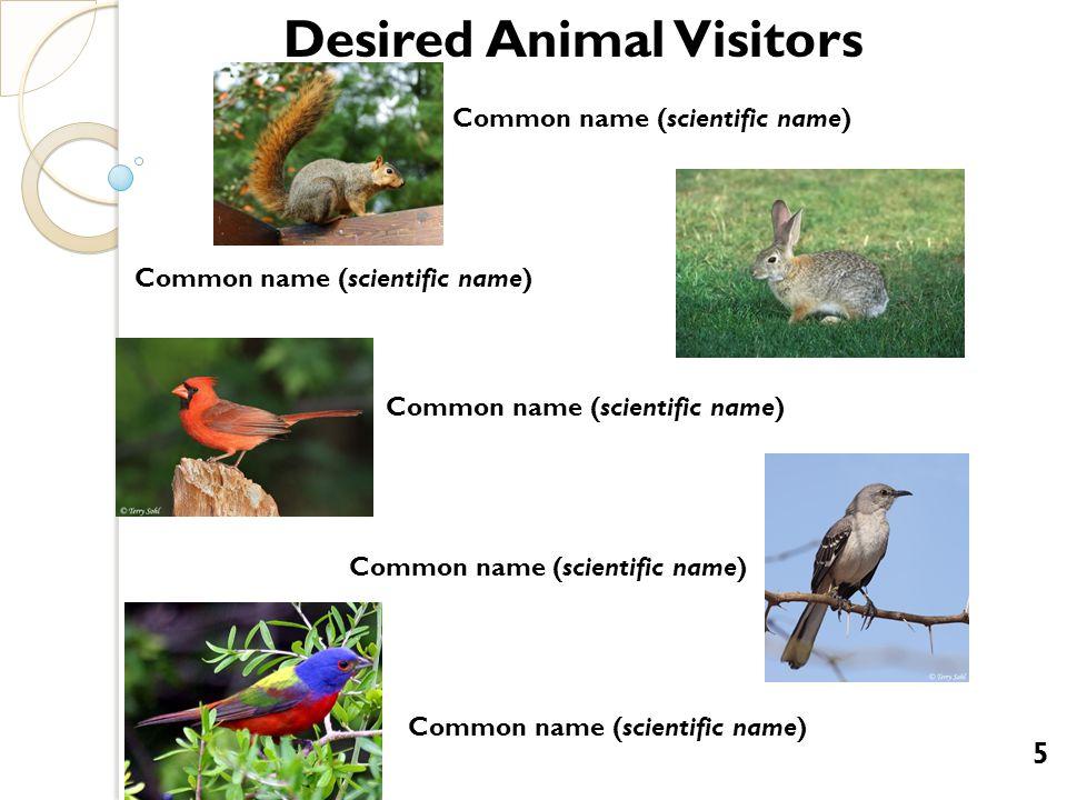Desired Animal Visitors Common name (scientific name) Common name (scientific name) 5