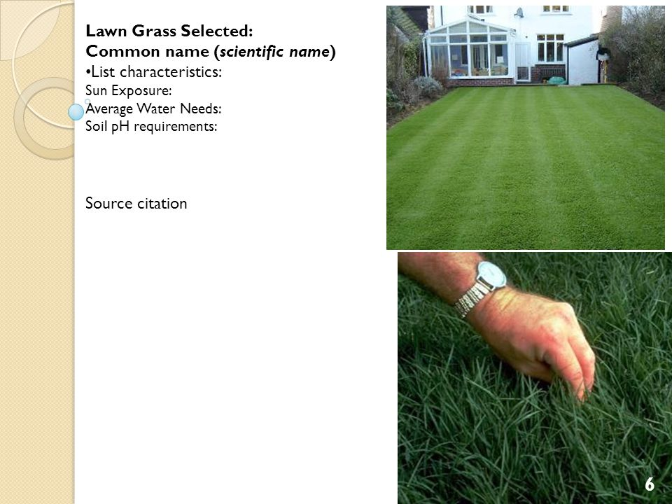 Lawn Grass Selected: Common name (scientific name) List characteristics: Sun Exposure: Average Water Needs: Soil pH requirements: Source citation 6