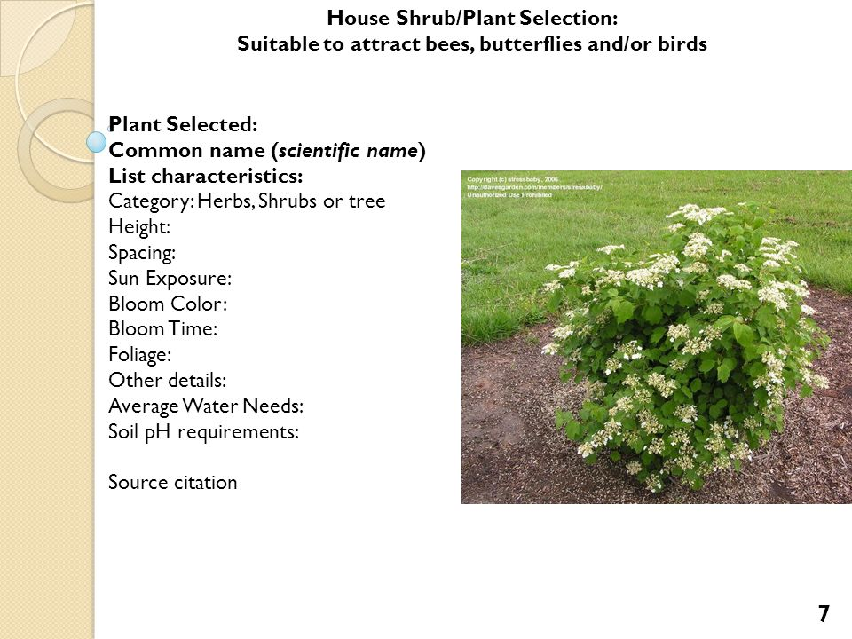 Plant Selected: Common name (scientific name) List characteristics: Category: Herbs, Shrubs or tree Height: Spacing: Sun Exposure: Bloom Color: Bloom Time: Foliage: Other details: Average Water Needs: Soil pH requirements: Source citation House Shrub/Plant Selection: Suitable for attracting bees, butterflies and/or birds 8