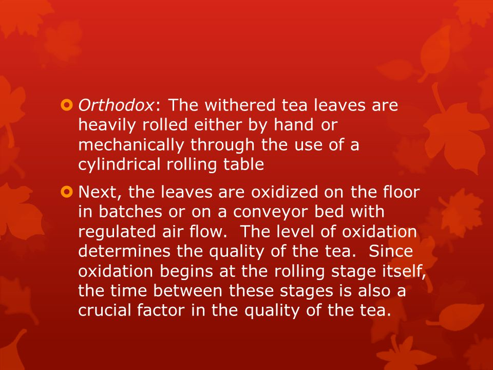  Orthodox: The withered tea leaves are heavily rolled either by hand or mechanically through the use of a cylindrical rolling table  Next, the leaves are oxidized on the floor in batches or on a conveyor bed with regulated air flow.