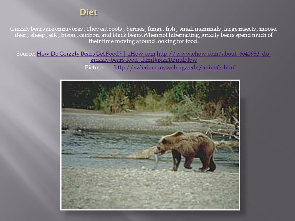 Grizzly bears are omnivores.