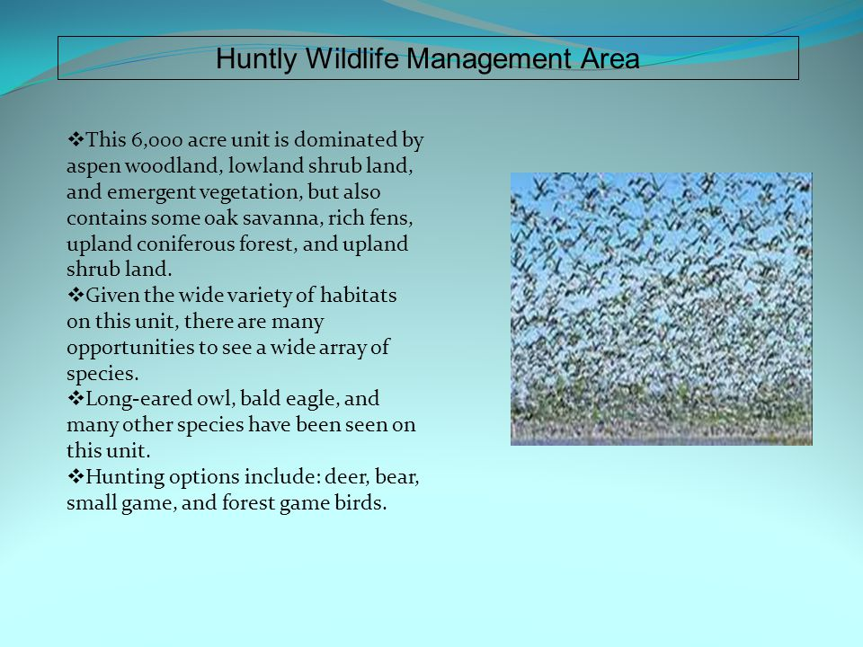 Huntly Wildlife Management Area  This 6,000 acre unit is dominated by aspen woodland, lowland shrub land, and emergent vegetation, but also contains some oak savanna, rich fens, upland coniferous forest, and upland shrub land.