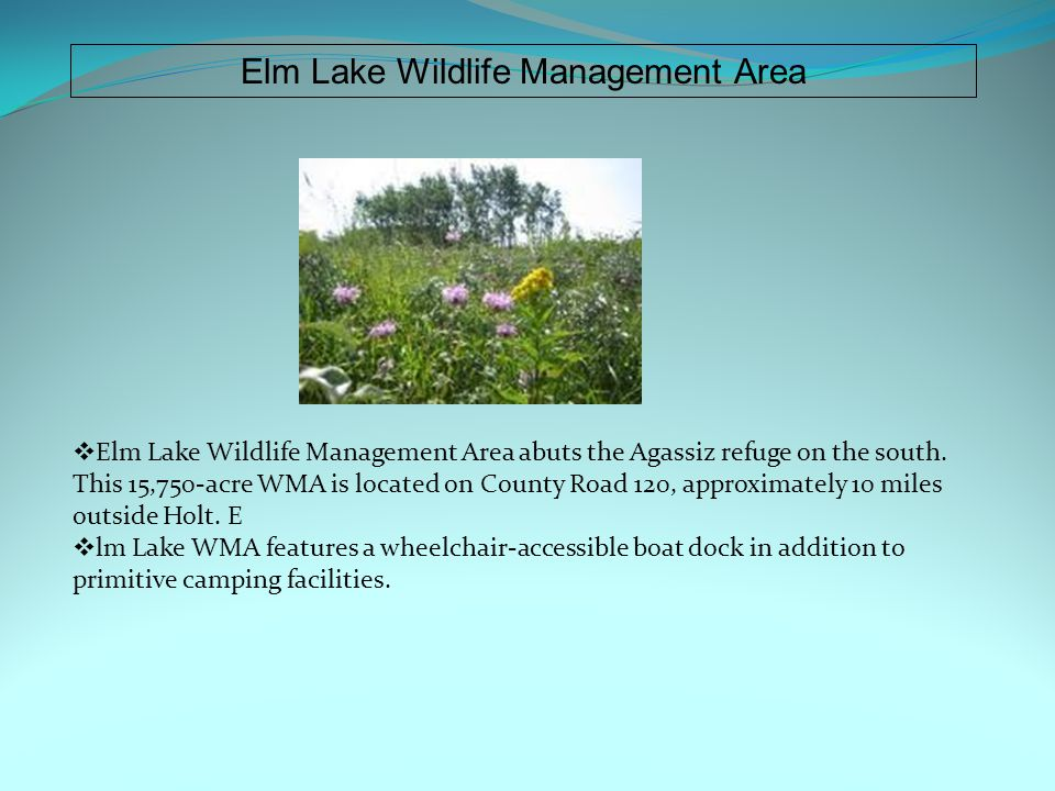 Elm Lake Wildlife Management Area  Elm Lake Wildlife Management Area abuts the Agassiz refuge on the south.