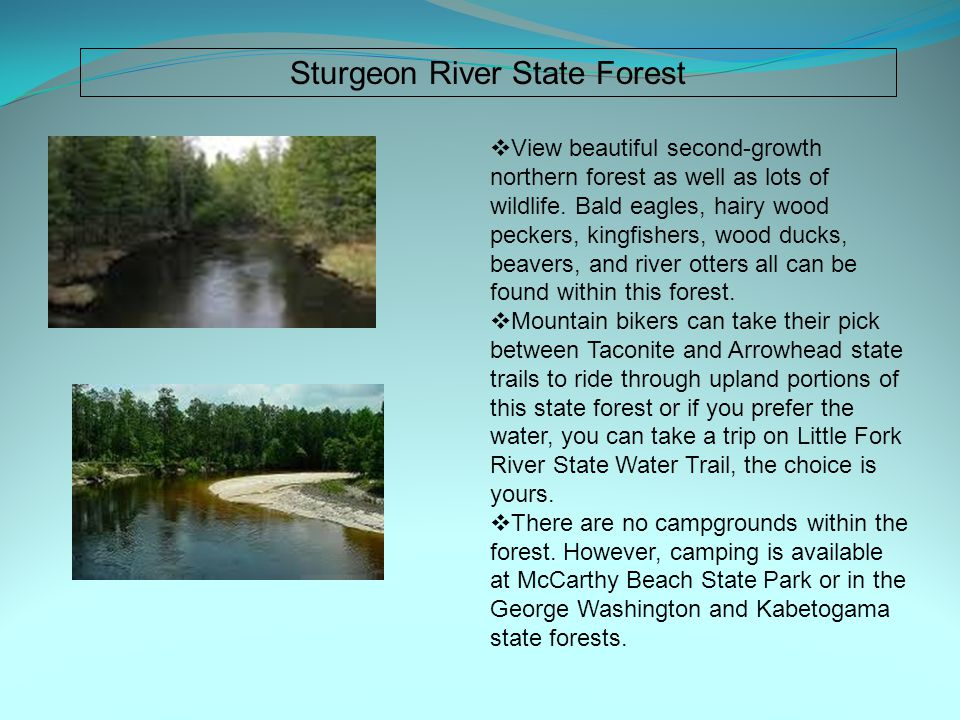 Sturgeon River State Forest  View beautiful second-growth northern forest as well as lots of wildlife.