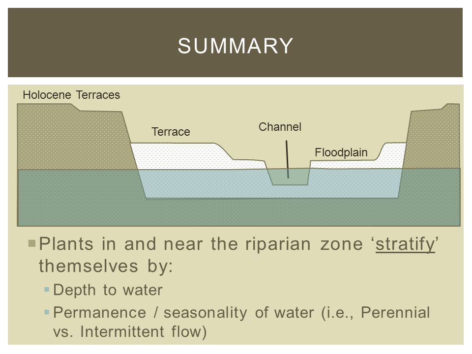  Plants in and near the riparian zone 'stratify' themselves by:  Depth to water  Permanence / seasonality of water (i.e., Perennial vs.