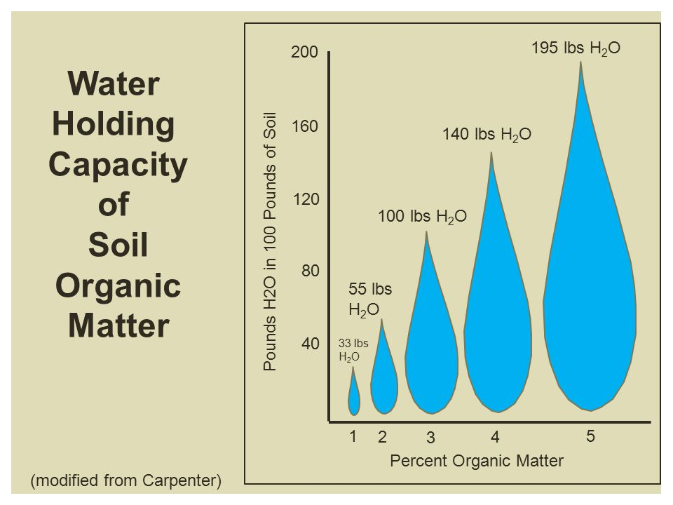 1 2 3 4 5 Pounds H2O in 100 Pounds of Soil 40 80 120 160 200 195 lbs H 2 O 140 lbs H 2 O 100 lbs H 2 O 55 lbs H 2 O 33 lbs H 2 O Percent Organic Matter Water Holding Capacity of Soil Organic Matter (modified from Carpenter)