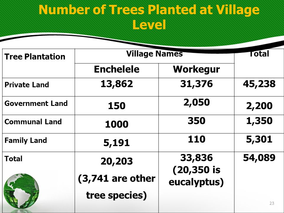 23 Tree Plantation Village NamesTotal EncheleleWorkegur Private Land 13,86231,37645,238 Government Land 150 2,050 2,200 Communal Land 1000 3501,350 Family Land 5,191 1105,301 Total 20,203 (3,741 are other tree species) 33,836 (20,350 is eucalyptus) 54,089 Number of Trees Planted at Village Level